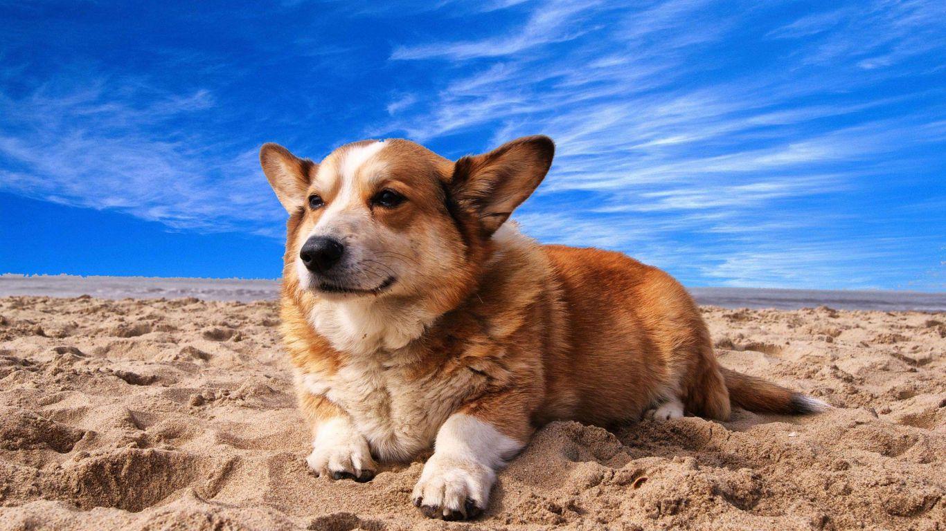 pineto-beach-village-camping-pineto-abruzzo-pets-club-1