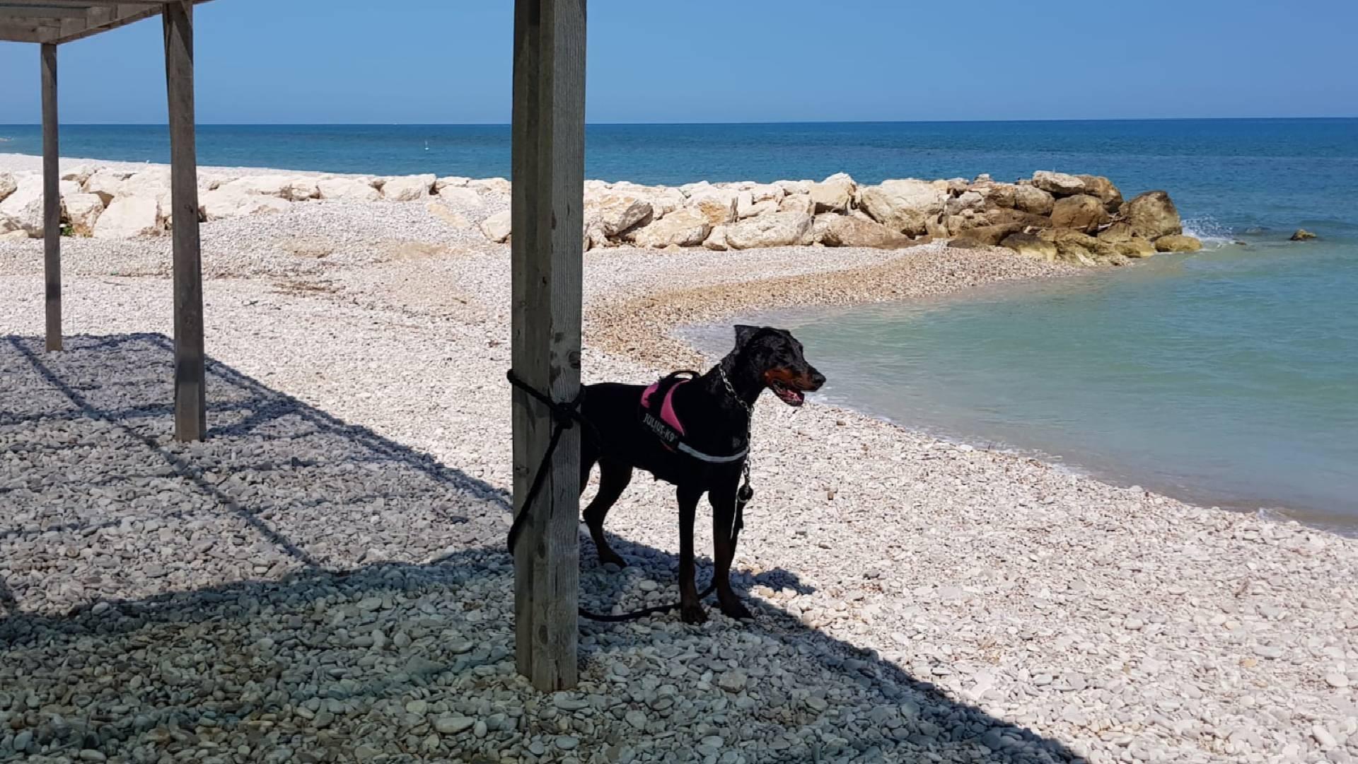pineto-beach-village-e-camping-bau-beach-2